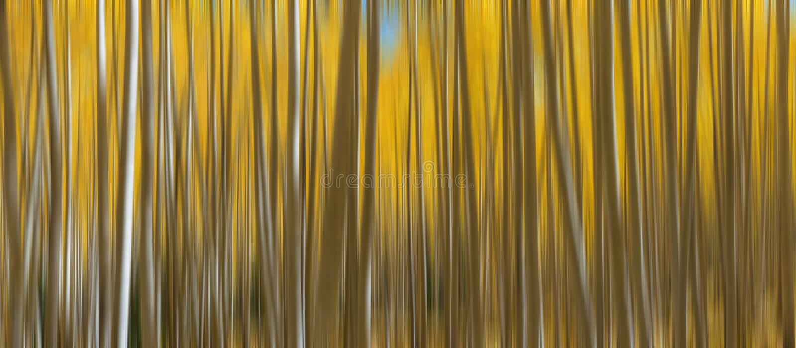 Autumn Aspen Trees Abstract Panorama imagem de stock
