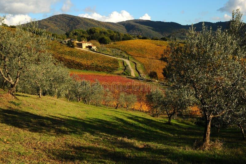 Autumn Atmosphere i en Wineyards i Tuscany, Chianti, Italien royaltyfri foto
