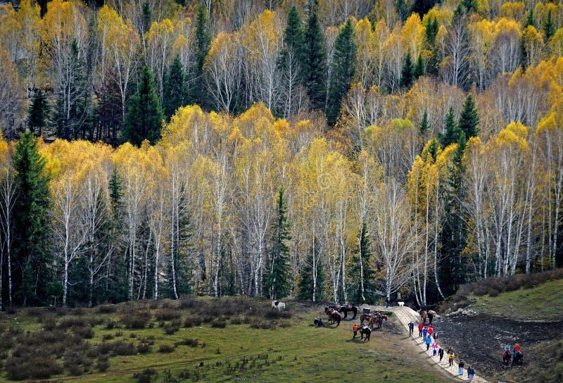 The Autumn royalty free stock photos