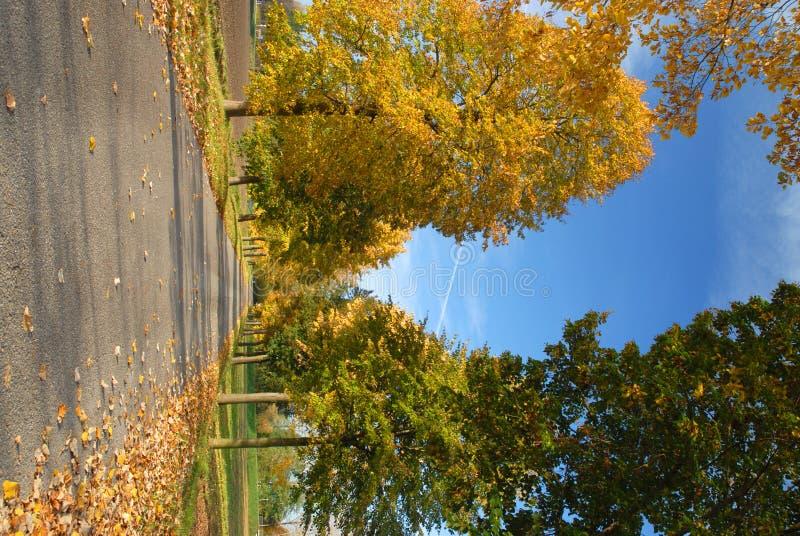 Autumn avenue stock photos