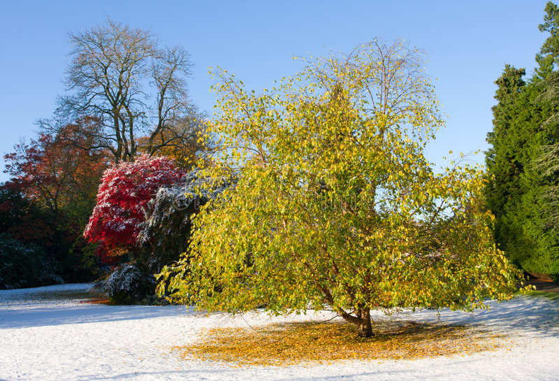 Download Autumn avenue stock photo. Image of avenue, evening, tree - 6937480