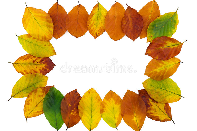 Autumn backdrop - frame composed of colorful autumn leaves. Over white royalty free stock photos