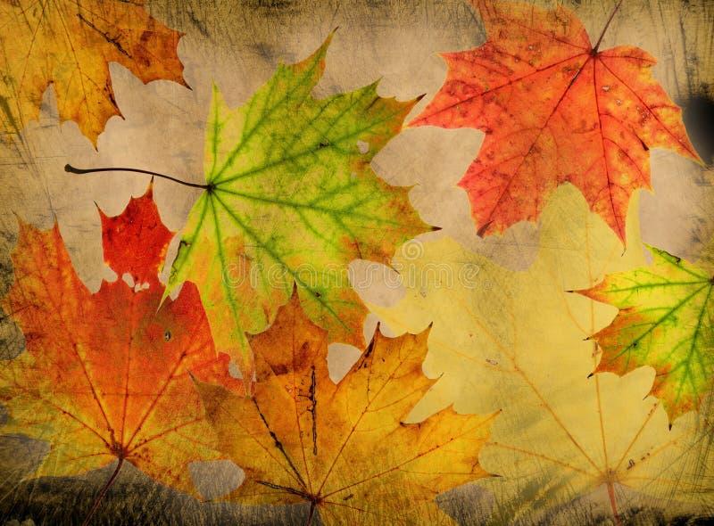 Download Autumn background stock illustration. Image of mottled - 16450589