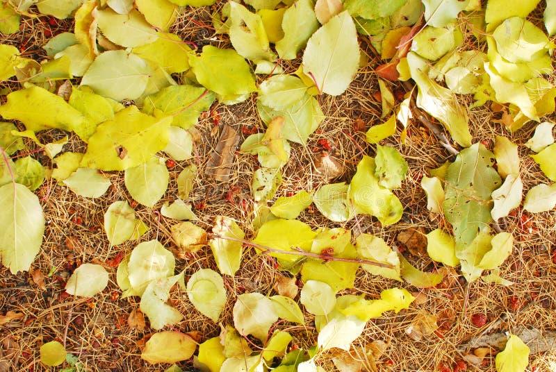 Autumn background. Close up shot of autumn leaves royalty free stock image