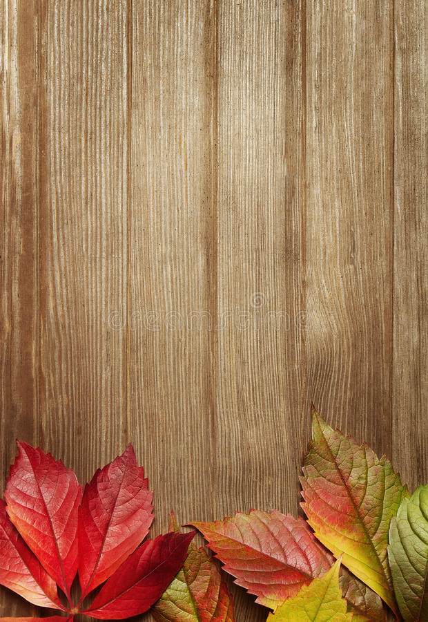 Download Autumn background stock image. Image of break, divided - 21341703