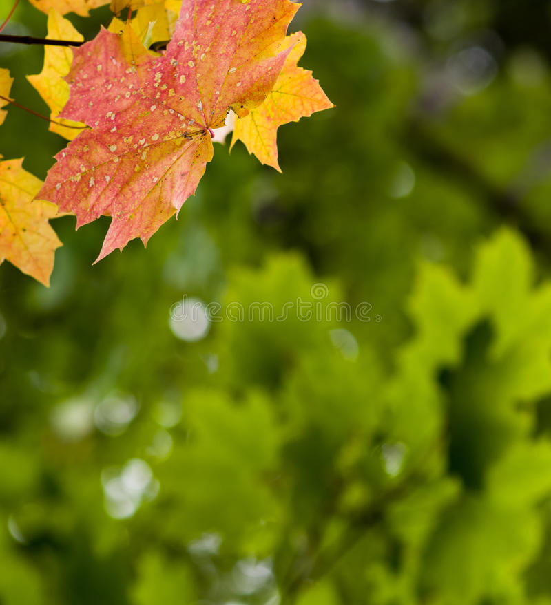 Download Autumn background stock photo. Image of life, fall, green - 26882512