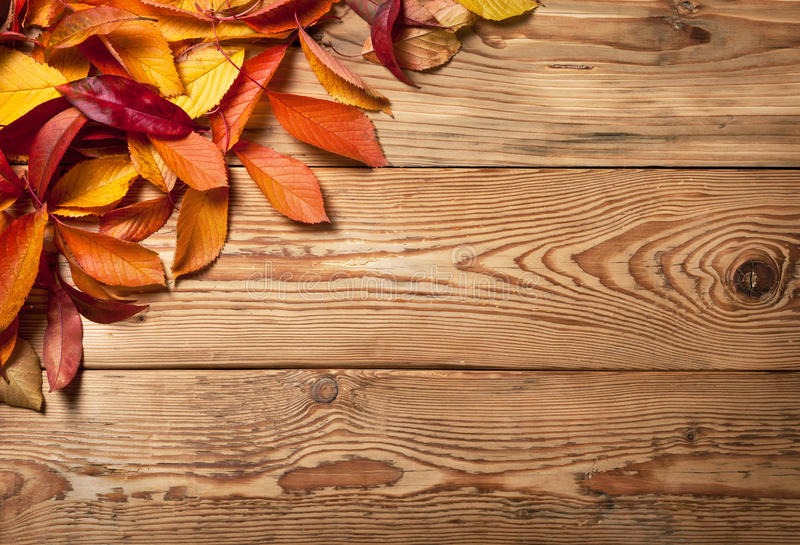 Autumn Background. Autumn leaves on wooden background with copy space. Top view royalty free stock images