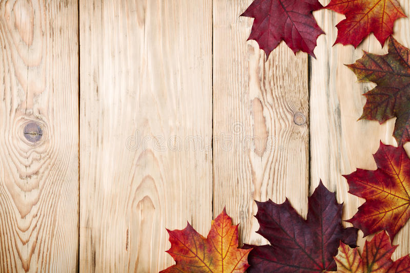 Autumn Background. Autumn maple leaves on wooden background with copy space. Top view royalty free stock image