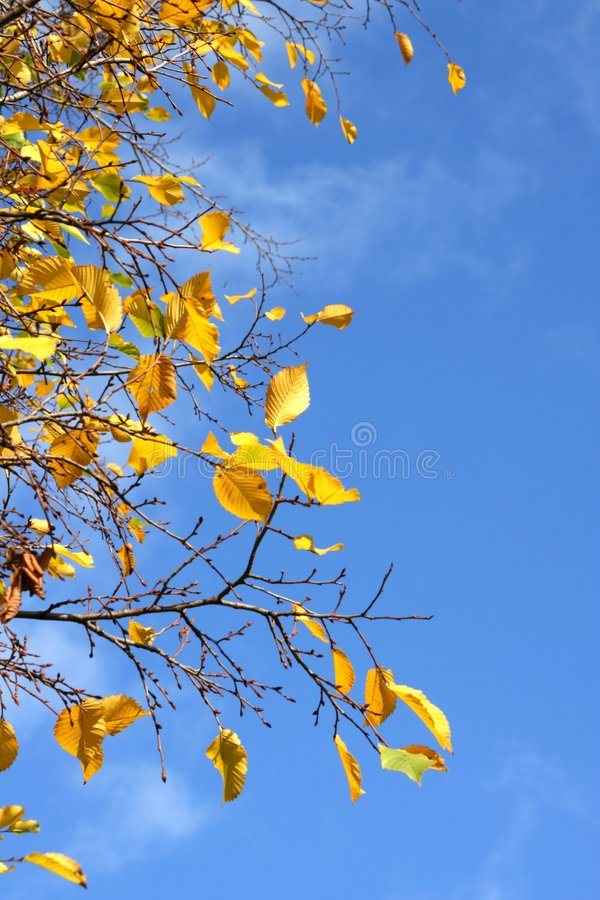 Free Autumn Background Royalty Free Stock Photos - 3396498