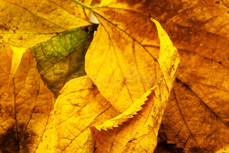 Download Autumn background stock photo. Image of foliage, flora - 6589696