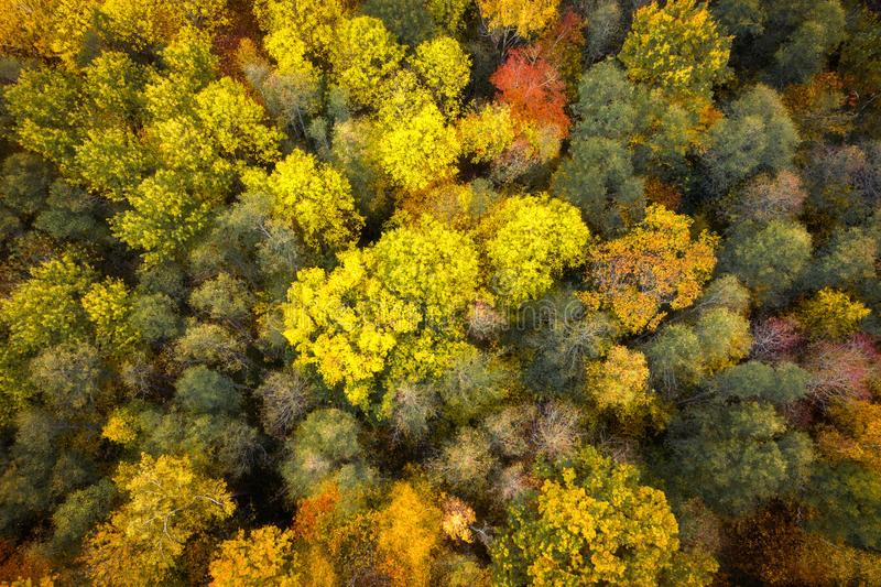 Autumn background. Autumn forest aerial view. Beautiful nature landscape from above. Top view on colorful trees in woodland. royalty free stock photography