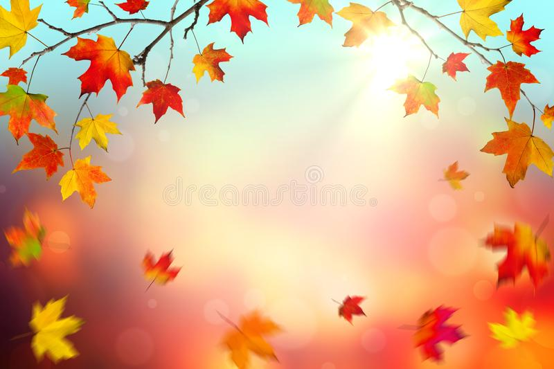 Falling Leaves In Autumn. Autumn Background banner with Colorful Falling Leaves And Sunlight stock photography