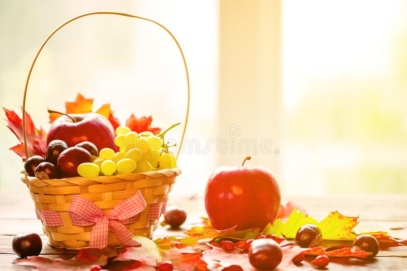 Autumn background with basket with yellow maple leaves, grapes, red apples. Frame of fall harvest on aged wood with copy space royalty free stock image