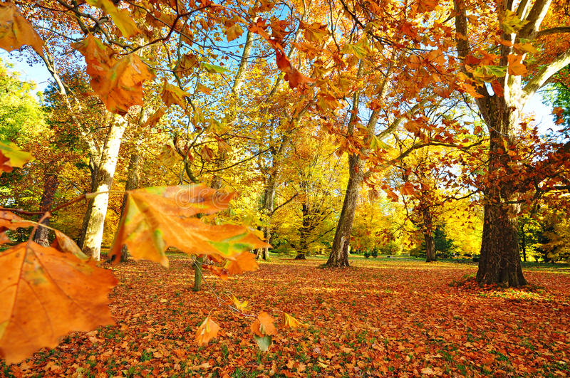 Nature autumn. Beautiful nature, autumn background, colorful trees royalty free stock images
