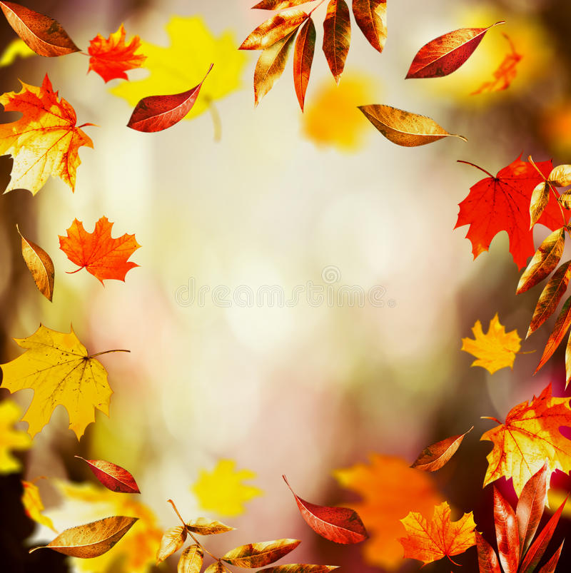 Autumn background with Beautiful falling leaves and bokeh, fall nature in garden stock photo