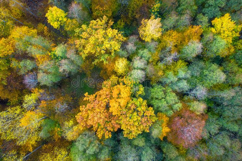 Autumn background. Beautiful yellow, green and red trees in autumnal forest from above. Fall scene. Autumn nature landscape royalty free stock photo