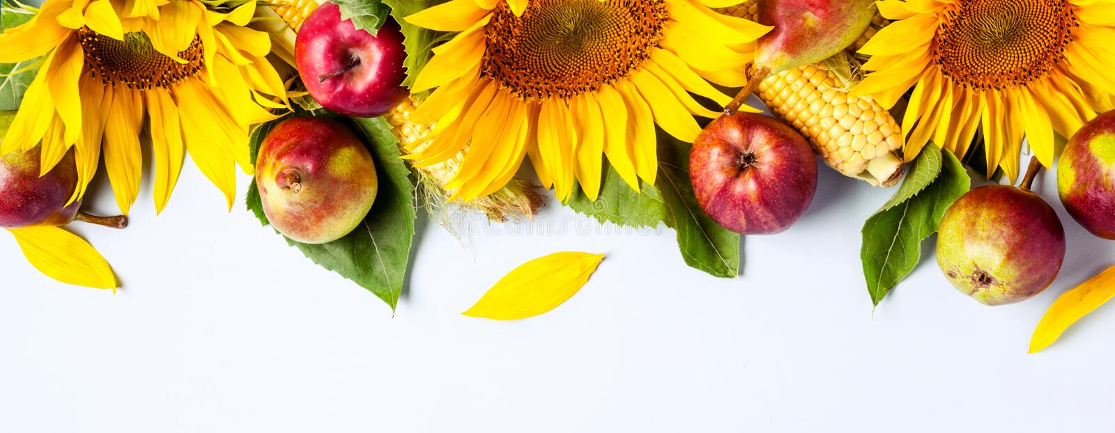 Autumn background. Border of sunflower, corn and pears. Harvest holiday concept. Long banner format royalty free stock images