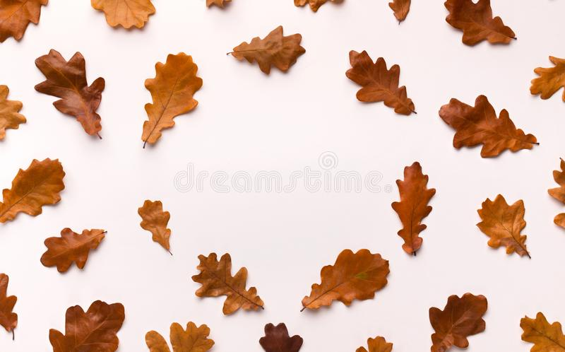 Autumn background with brown fallen leaves on white royalty free stock photos