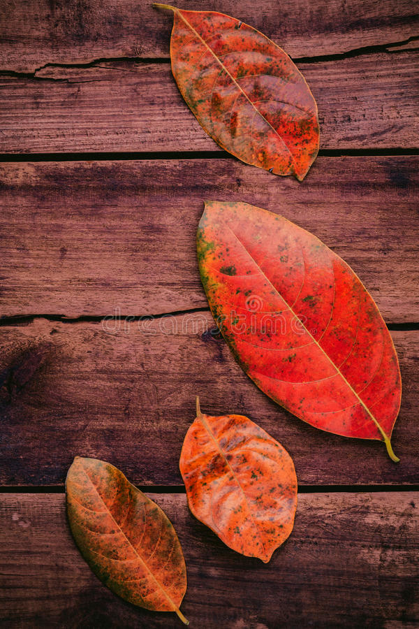 Autumn background with colored leaves falling on grunge wooden royalty free stock image