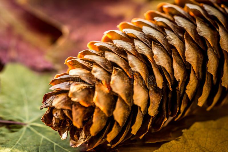 Autumn background with colored leaves and pinecone in. Germany royalty free stock images