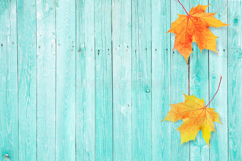 Autumn background with colored maple leaves on old wooden board. Beautiful autumn background with colored maple leaves on old wooden board. Two maple leaf stock images
