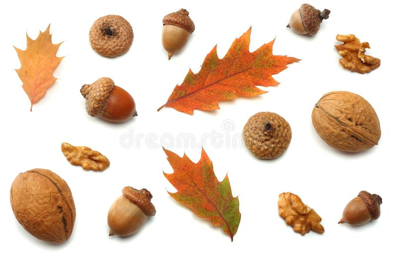 Autumn background with colored oak leaves isolated on white background. top view royalty free stock photography