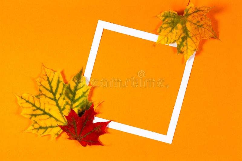 Autumn background. Colorful autumn fall leaves and white frame on orange color background.  royalty free stock photos