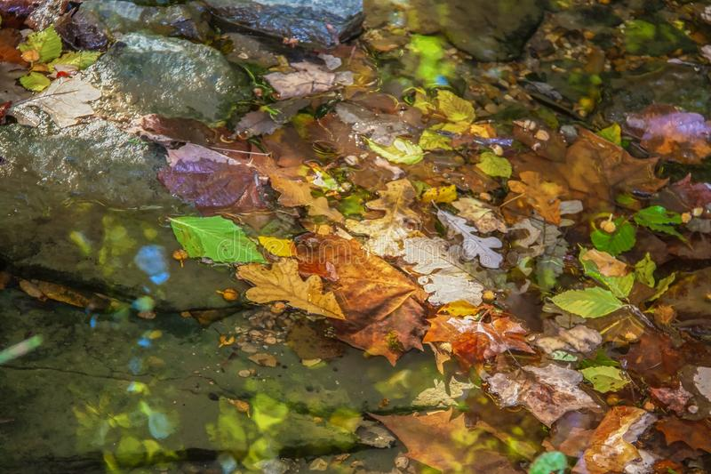 Autumn Background - Colorful fall leaves in a shallow stream with reflections and wet rocks and dappled sunshine - shallow focus royalty free stock image