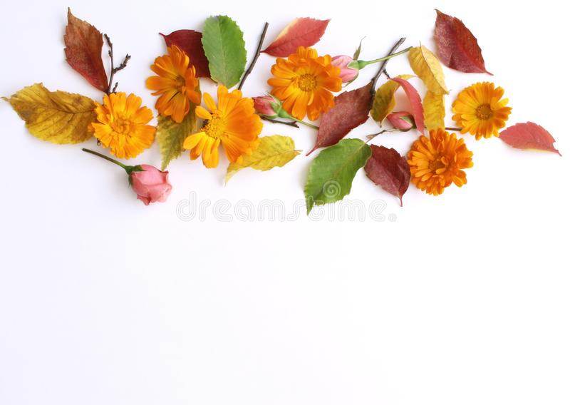 Autumn background. Creative flat layout of colorful autumn leaves and flowers.. Fall decorative concept.Flat lay stock photo