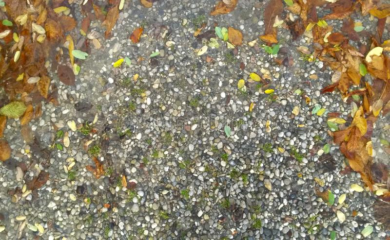 Autumn background - falling leaves against on a background sea stones, copy space royalty free stock photos