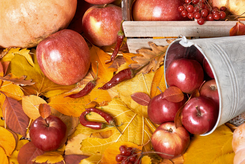 Autumn background, fruits and vegetables on yellow fallen leaves, apples and pumpkin, decoration in country style, dark brown tone. D royalty free stock images