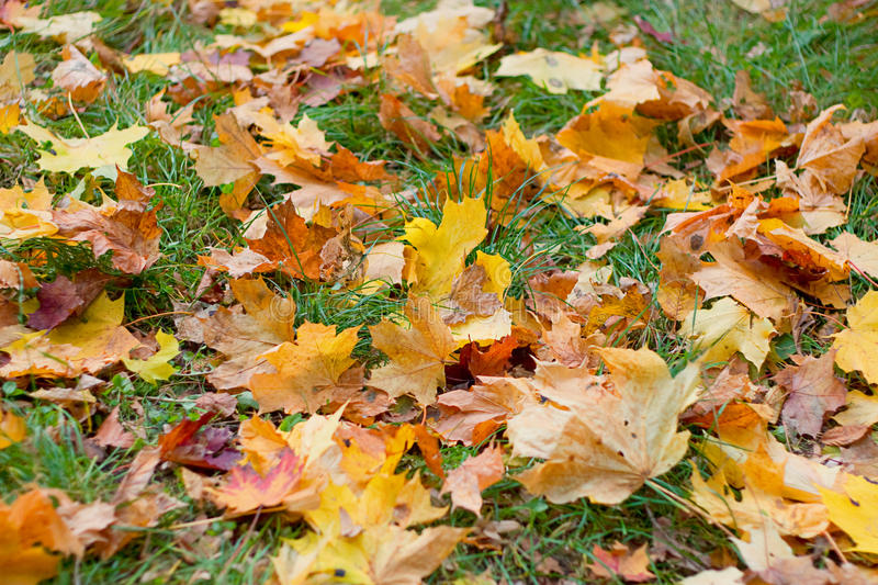 Download Autumn Background Stock Images - Image: 34272294