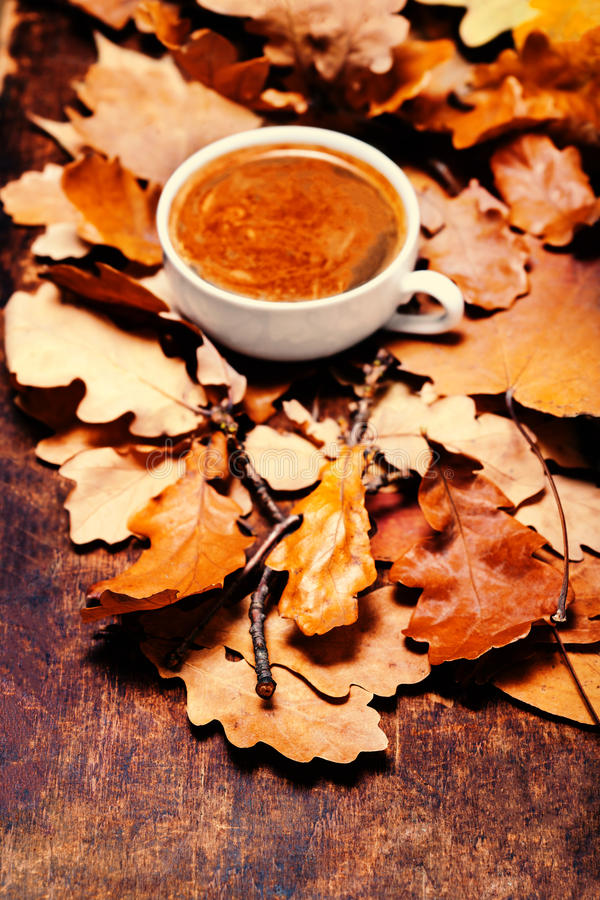 Autumn background with hot coffee cup over autumn colourful leaves and knitted scarf with copy space for your design.. stock image