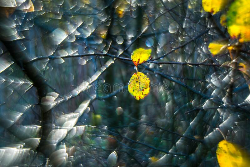 Autumn background of last leaves after rain. Autumn background, nature macro detail of yellow last leaves after rain stock image