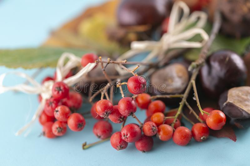 Autumn background. Leaves, chestnuts, dried leaves, rowan berries on pastel blue background. Autumn, fall concept. View from above royalty free stock photos