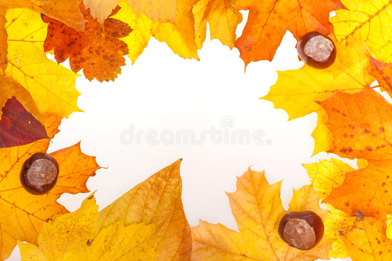 Autumn background with leaves and chestnuts stock photos