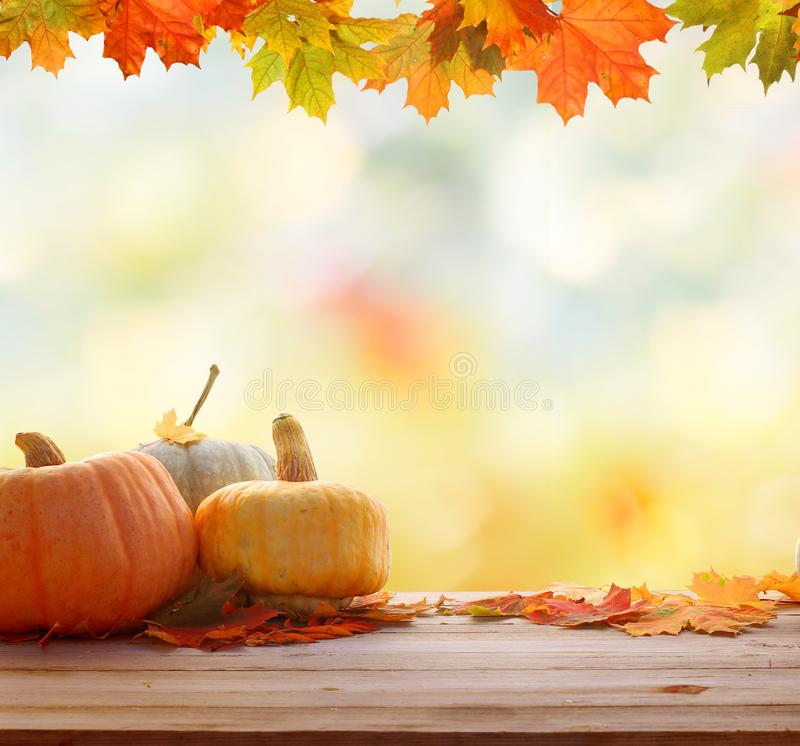 Autumn background with leaves and pumpkins.Harvest or Thanksgiving background royalty free stock photo