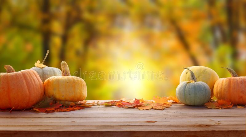 Autumn background with leaves and pumpkins.Harvest or Thanksgiving background royalty free stock image