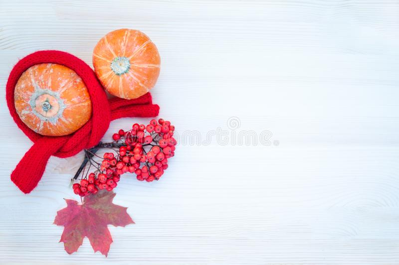 Autumn background with maple leaves,  pumpkins, mountain ash with copy space. Mockup for autumn offers. royalty free stock photo