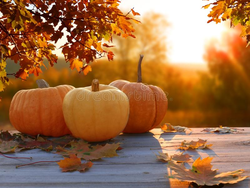 Autumn background with maple leaves and pumpkins.Thanksgiving background royalty free stock image