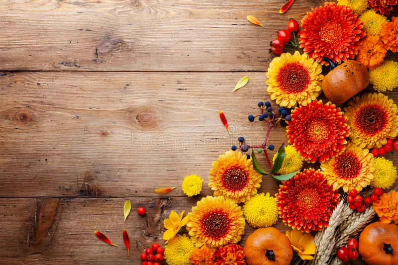 Autumn background with orange and yellow gerbera flowers, red berries, decorative pumpkins, wheat ears. Thanksgiving day stock image