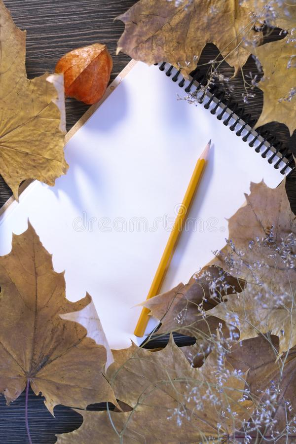 Autumn background. Maple leaves, place for text. Happy Halloween, harvest, the beginning of the school concept royalty free stock photography