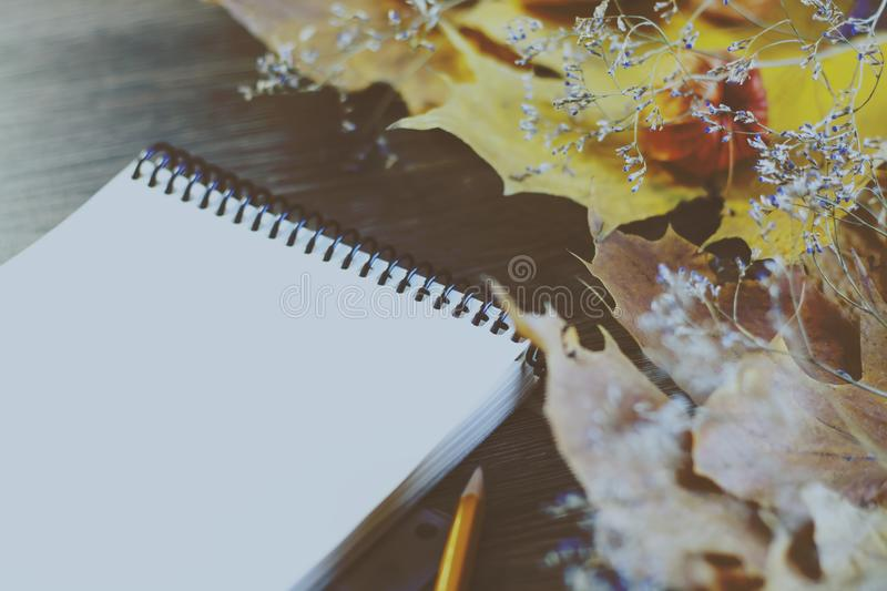 Autumn background Maple leaves, place for text. Happy Halloween, harvest, the beginning of the school concept stock photography