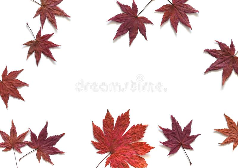 Autumn background with red leaves royalty free stock photos