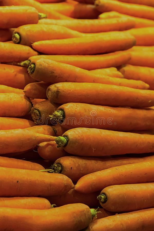 Autumn background ripe whole orange carrot row of long fruit stacked neat symmetrical set vegetable pattern bright design base use. Ful vitamin products for diet royalty free stock image