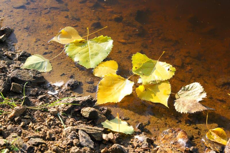Autumn Background Season, einige gefallene Blätter, die auf Wasser schwimmen lizenzfreies stockfoto