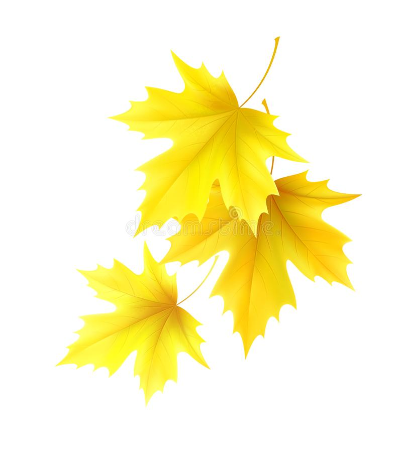 Free Autumn Background With Yellow Maple Leaf Leaves. Vector Illustration Stock Image - 147772241