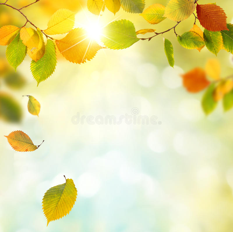 Autumn. Background with wooden planks royalty free stock photography