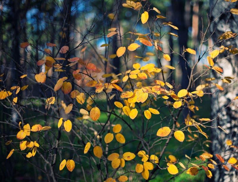 Download Autumn background stock photo. Image of orange, landscape - 33400040