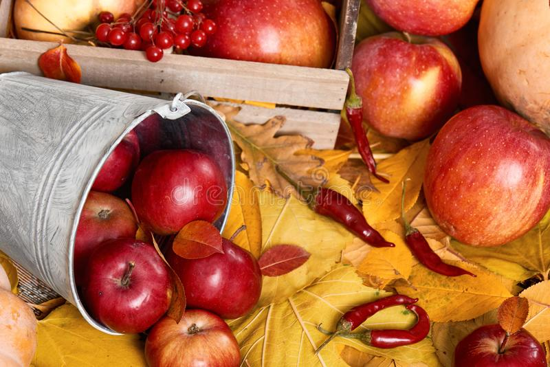 Autumn background from yellow leaves, apples, pumpkin. Fall season, eco food and harvest concept royalty free stock image